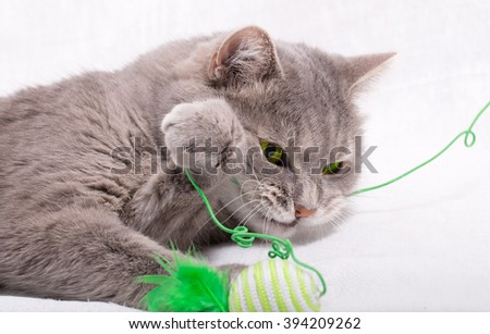 The cat has snapped at a thread from a toy and holds her with a paw. White background, close up, small depth of sharpness - stock photo