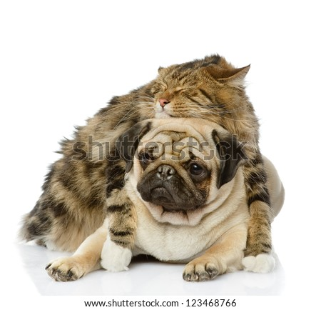 the cat hugs a dog. isolated on white background - stock photo