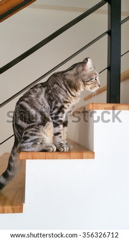The cat in the house keep Look forward - stock photo