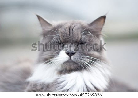 The cat is on the table In the background blurred colorful cute cats close up funny playful young cat , domestic cat cat cat relaxing Cats play at home relaxing , elegant cat 8 - stock photo