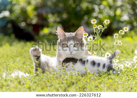 The cat is playing with a kitten on the green grass