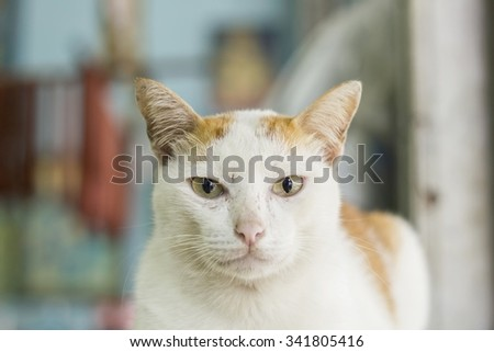 The Cat Looking At Camera. - Felidae - stock photo