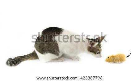 The cat looking the toy mouse isolated on white background - stock photo