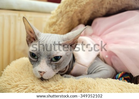 The cat on bed of cat.  - stock photo