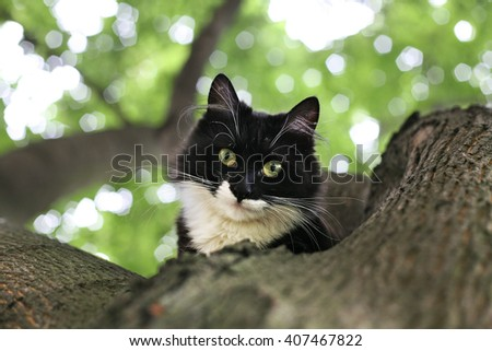 the cat on the tree - stock photo