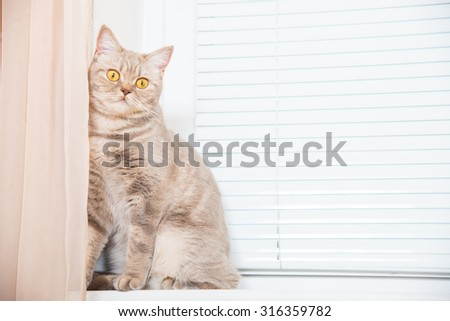The cat sits on a window