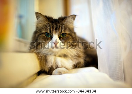 The cat sits on the windowsill - stock photo