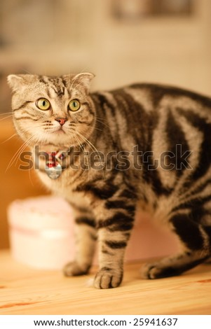 the cat turn its head to the camera. - stock photo