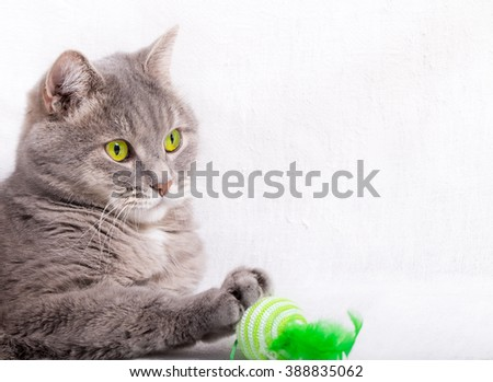 The cat with green eyes has put a paw on a toy. Light background, close up, small depth of sharpness - stock photo