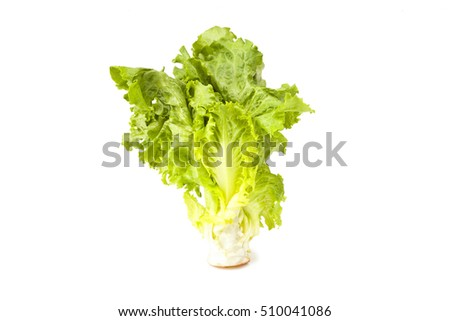 The center portion of a romain head lettuce organic that illustrates fresh young green leaves.