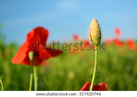 The charming landscape with poppies in sunny day against the sky (spouses, family, sex, genitals, penis, vagina, love, feelings - concept) - stock photo