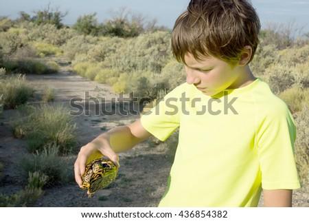 The child holds  Three-toed box turtle (Terrapene carolina triunguis)  in hands - stock photo