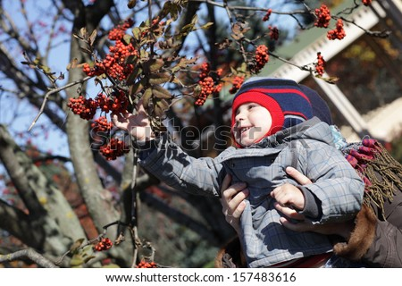 The child taking rowan in the autumn park - stock photo