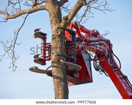 The claw of a tree cutting crane about to cut a tree - stock photo