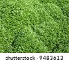 The close-up of grass for texture or background - stock photo