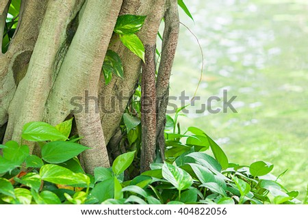 the closeup root tree white heart leaf on the river - stock photo