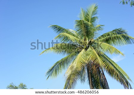 The Coconut, rice field with Blue sky ,outdoor style