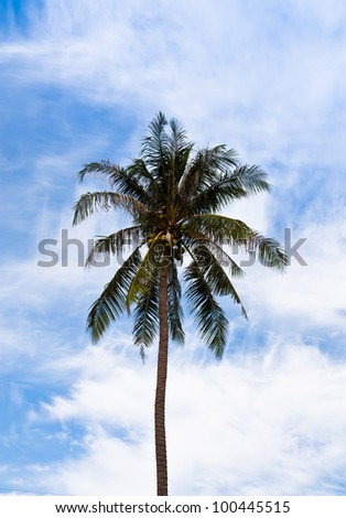 The coconut tree is one that grows and the sky behind.
