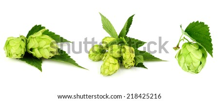 The collage green hop isolated on white background. - stock photo