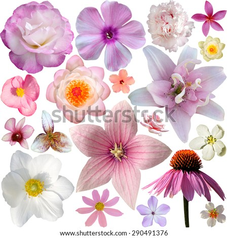 The collection of pink summer flowers isolated on white - stock photo