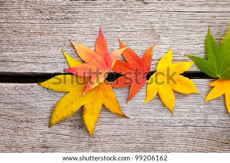 The color leaves on the wooden background . - stock photo