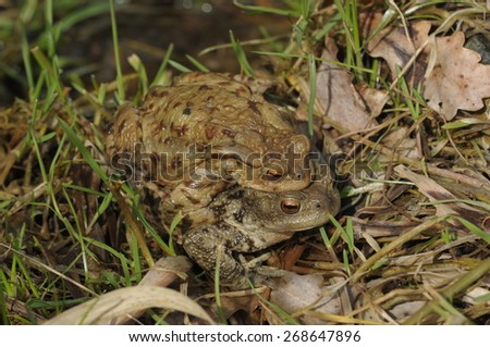 The color photo of Toad frog . - stock photo