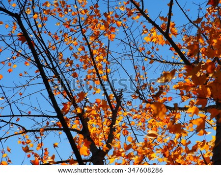 The colorful and beautiful autumn leaves in autumn sunny day