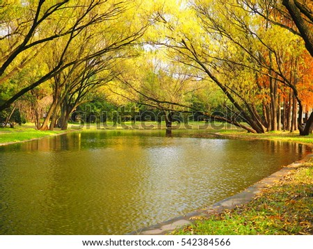The colorful and beautiful autumn view with one river in the park