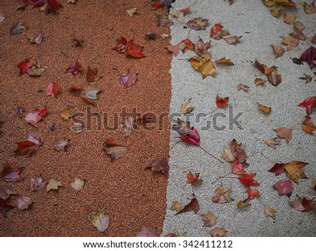 The colorful and beautiful dropped autumn leaves
