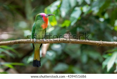 The colorful bird of Thailand.