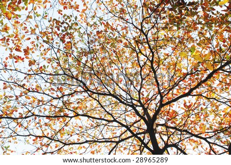 The colorful leaves on twigs background.
