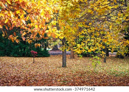 The colors of autumn. - stock photo