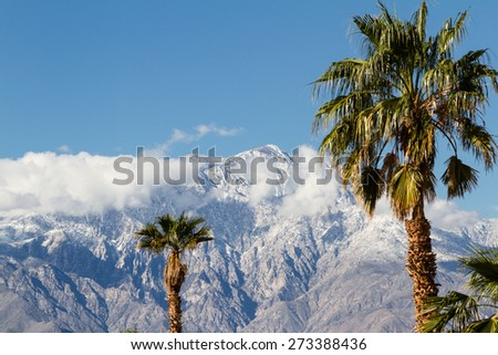 the contrast of winter in California. warm palm trees in the valley and snow in the high mountains - stock photo