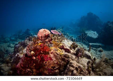 The coral heads on turtle reef were very colorful. - stock photo