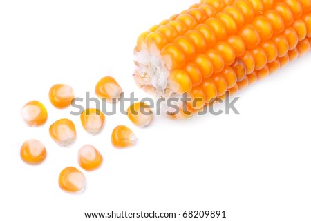 The corn on a white background. Close up with shallow DOF. - stock photo