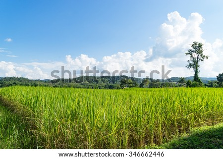 The Corner end of a paddy field in moutain
