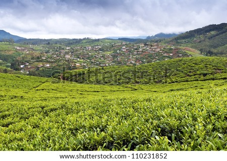 The countryside with tea plants and vegetable gardens