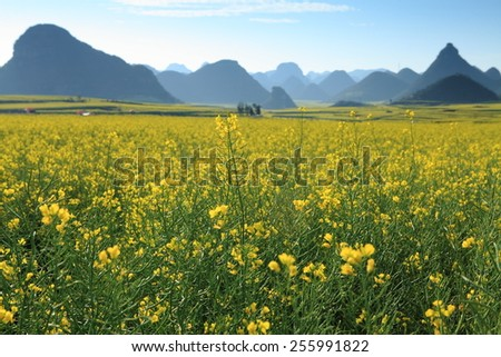 The county of Luoping in eastern Yunnan is noted for its beautiful scenery in spring. - stock photo