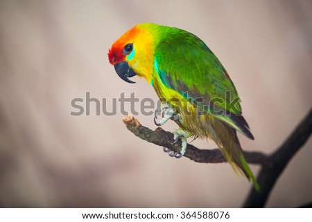 The court parrot ,colorful parrot ,beautiful parrots,parrots looking for parrots sitting,animals - stock photo