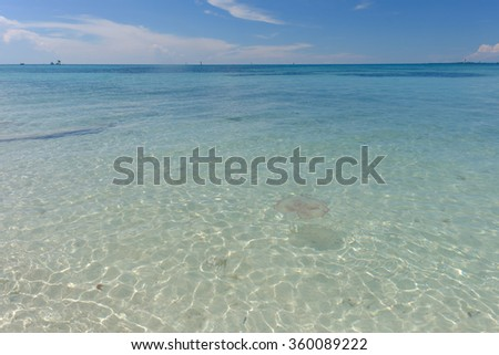The crystal clear and shallow waters on the islands of the tropical Dry tortugas and huge jelly fish swimming in the shallow waters - stock photo