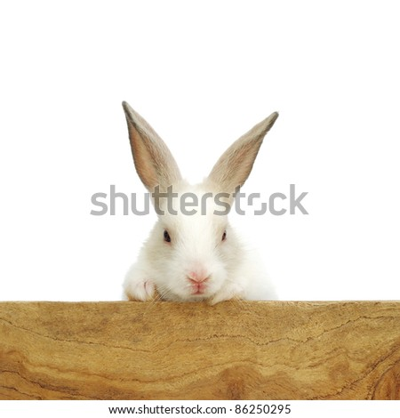The curious baby rabbit - stock photo