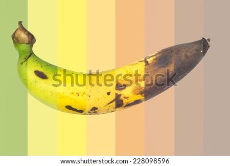The cycle life of banana - stock photo