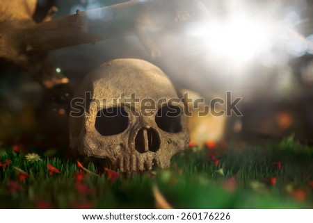 the cycle of life and death. Photo unburied human remains on the blooming flowers - stock photo