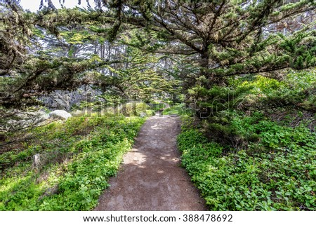 The Cypress Grove Trail at Point Lobos State Natural Reserve is ideal for hiking, walking running, along the rugged Big Sur coastline, near Carmel and Monterey, CA. on the California Central Coast. - stock photo