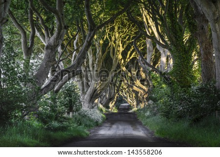 The Dak Hedges Co. Antrim, Northern Ireland - stock photo
