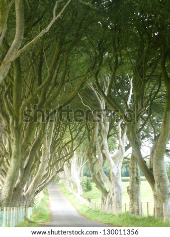 The Dark Hedges in Country Antrim, Northern Ireland - stock photo