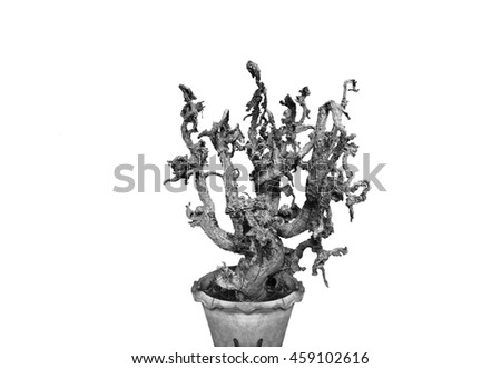 The dead cactus with white background. - stock photo