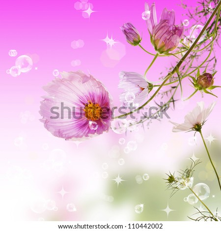 The decorative garden spring flowers over abstract blur backgrounds - stock photo