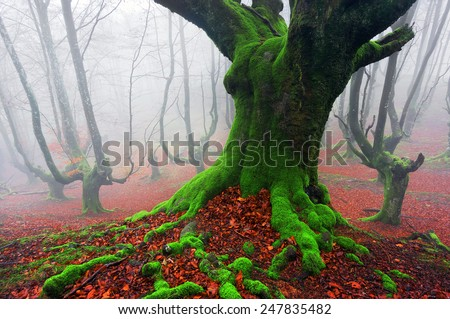 the deep of the forest - stock photo