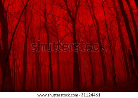 The deep woods with a deep red fog like a eerie scene from a horror movie. - stock photo